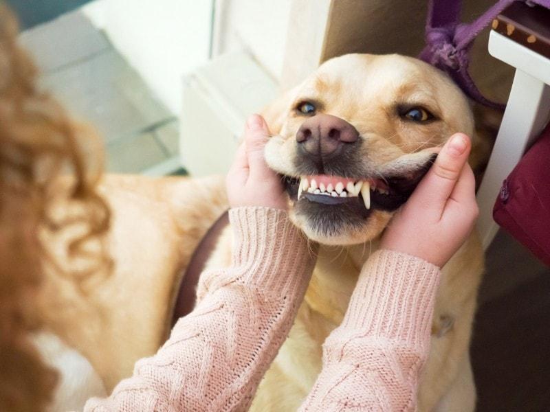 Your Pet's Dental Hygiene: Questions and Answers