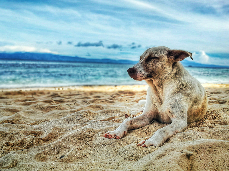 Five beaches to go with dogs