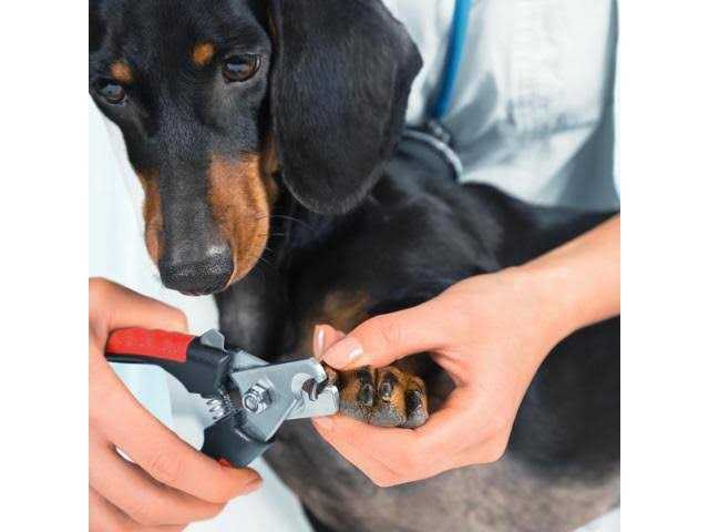 Cutting Dog's Claws: That's how it works!