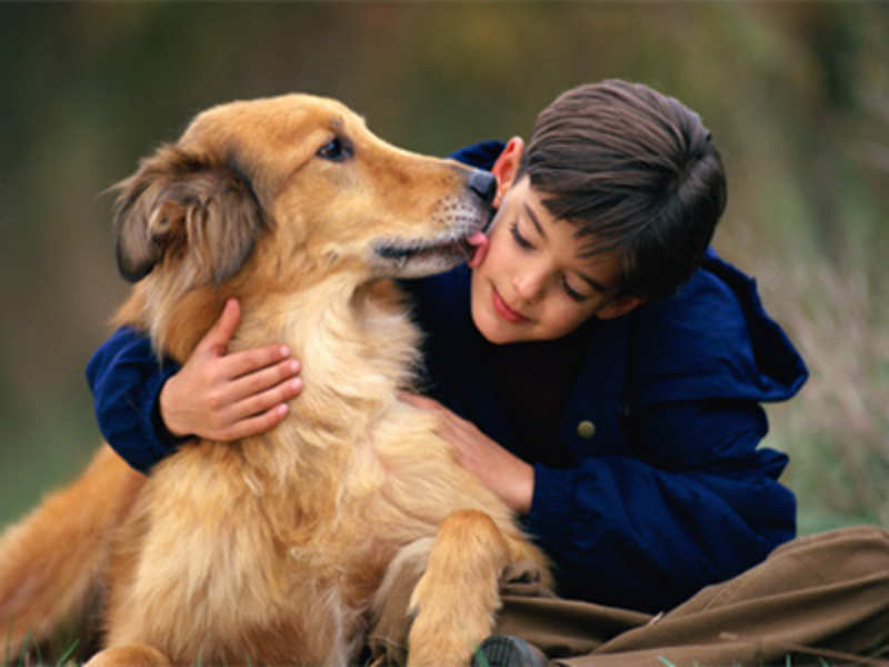 Is a pet dog right for you?