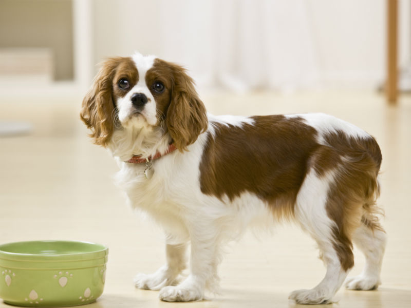 Think or home-cooked dog food, what's better?